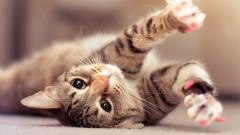 Cute Cats 18584
