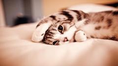Cute Cats 18591