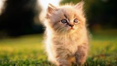 Cute Cats 18597