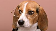 Cute Dog with Glasses Wallpaper 40033