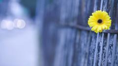Cute Macro Flower 34772