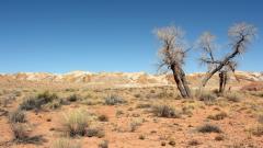 Desert Wallpaper 41777