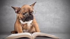 Dog with Glasses Wallpaper 40032