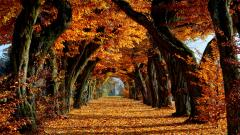 Fall Wallpaper 15877