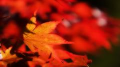 Fall Wallpaper 15879