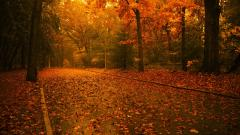 Fall Wallpaper 15889
