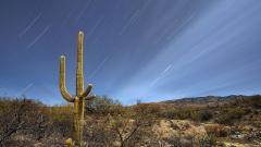 Fantastic Saguaro Wallpaper 41780