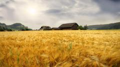 Farm Wallpaper 16690