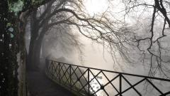 Fog Wallpapers 36642