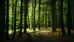 Forest Background 18572