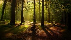 Forest Background 18573