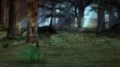 Forest Backgrounds 18581