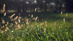 Free Grass Bokeh Wallpaper 33931
