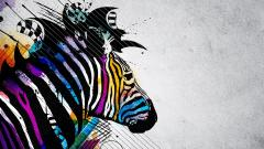 Free Zebra Wallpaper 16993
