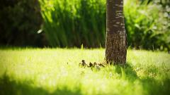 Grass Bokeh 33907
