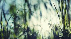 Grass Bokeh 33909