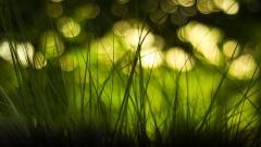 Grass Bokeh 33916