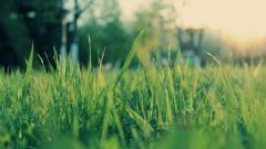 Grass Bokeh 33924