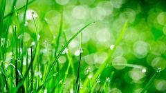 Grass Bokeh 33935