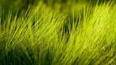 Grass Bokeh HD 33911