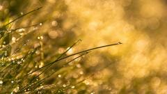 Grass Bokeh Wallpaper 33905
