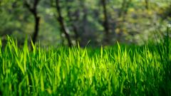 Grass Bokeh Wallpaper 33920
