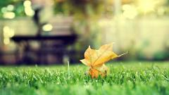 Leaf Bokeh Wallpaper 33925