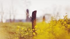 Lovely Yellow Flowers Wallpaper 44639