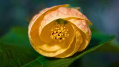 Macro Flower 34774