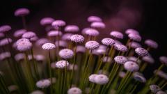 Macro Flowers HD 34760