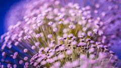 Macro Flowers HD 34761