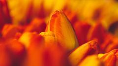 Macro Flowers Wallpaper 34770