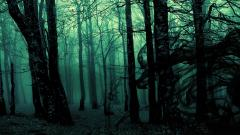 Mysterious Forest Background 18571