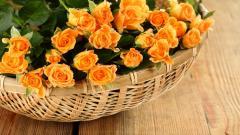 Orange Roses 29734