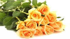 Orange Roses 29744