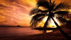 Palm Tree Wallpaper 22002