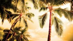 Palm Tree Wallpaper 22003