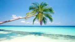 Palm Tree Wallpaper 22006
