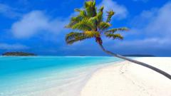 Palm Tree Wallpapers 22015