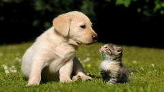 Pictures Of Cute Animals 19729