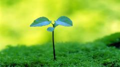 Plant Wallpaper 41756