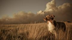 Pretty Dog Field Wallpaper 44805