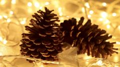 Pretty Pinecone Wallpaper 23359