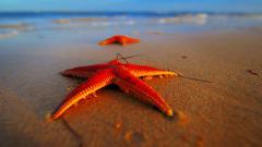 Sea Stars 8993