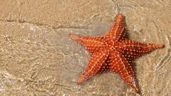 Sea Stars 8996