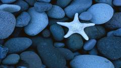 Sea Stars 8998