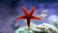 Sea Stars 8999