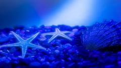 Sea Stars 9001