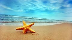 Sea Stars 9002