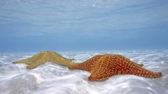 Sea Stars 9003